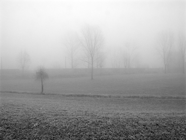 Paesaggio nebbia